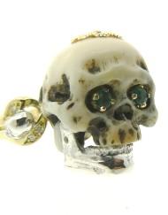coral skull_800x600